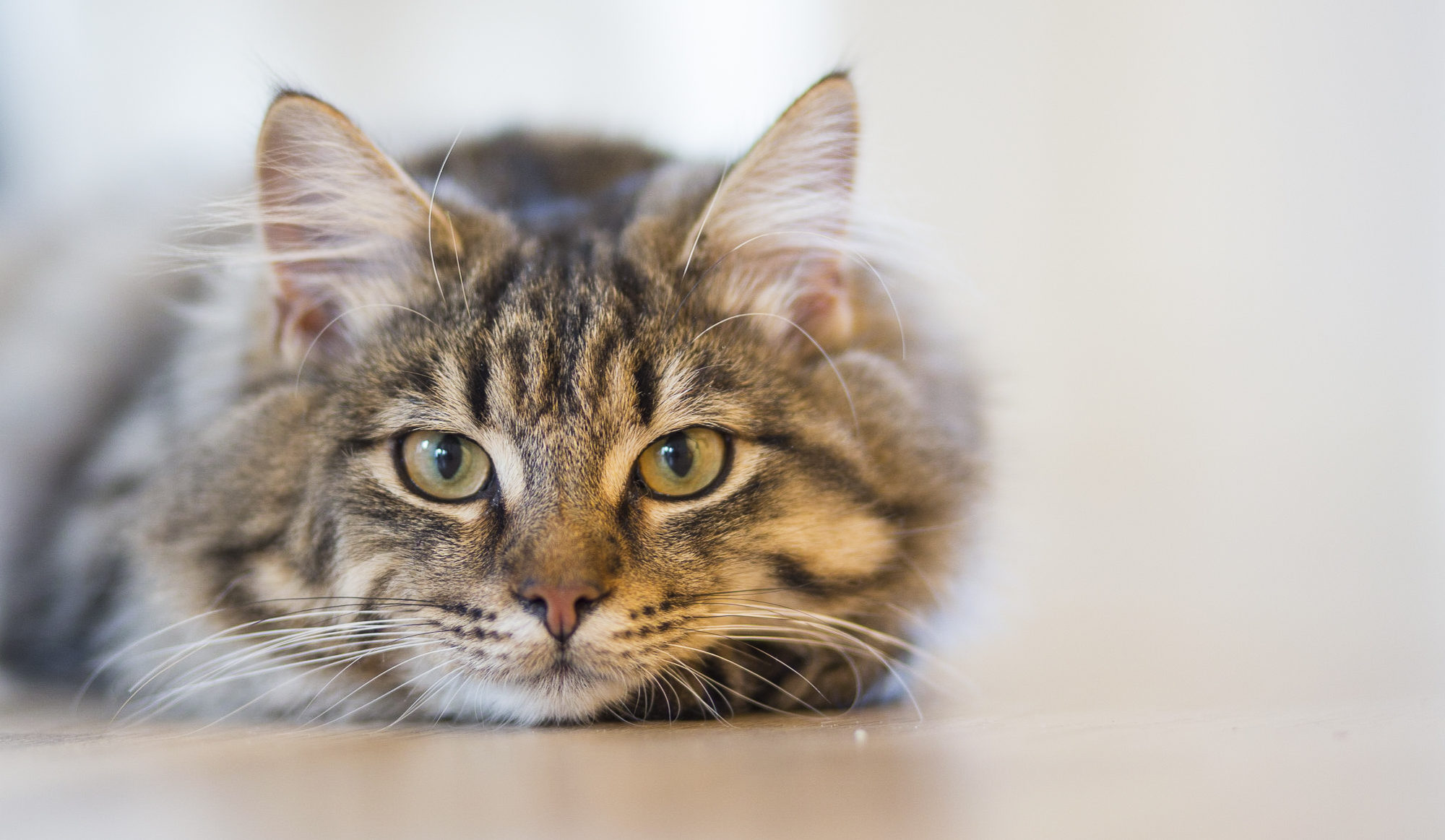 5 Things to Keep in Mind After You Buy a Cat or a Kitten