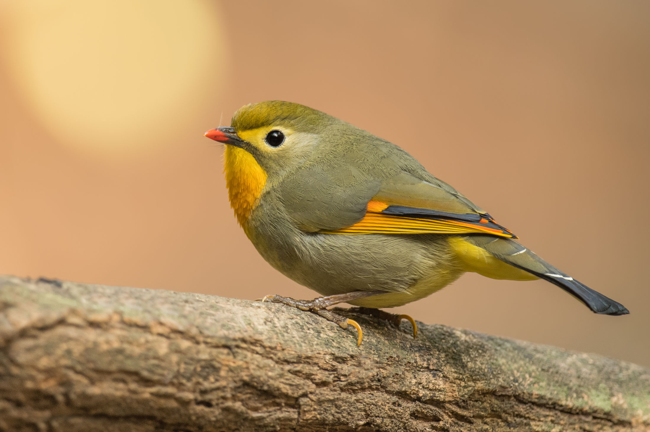Attract More Birds in Your Garden by Feeding Them with Niger Seeds