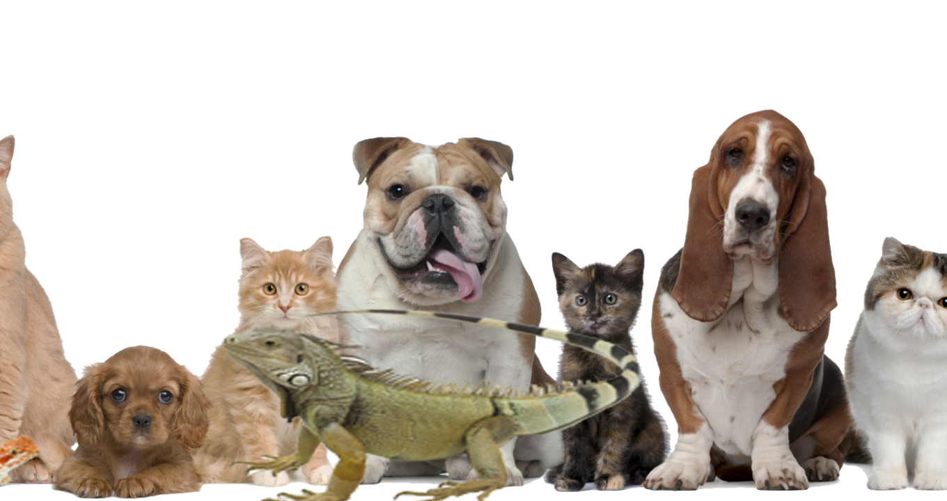Check Popular Pet Products Only at Wet Nose Boutique!