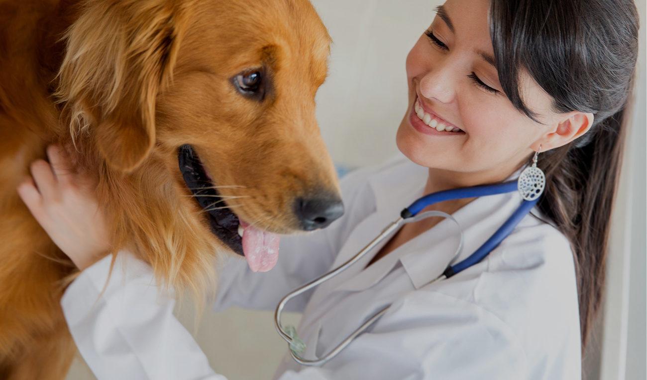 Diagnosing Health Conditions in Pets