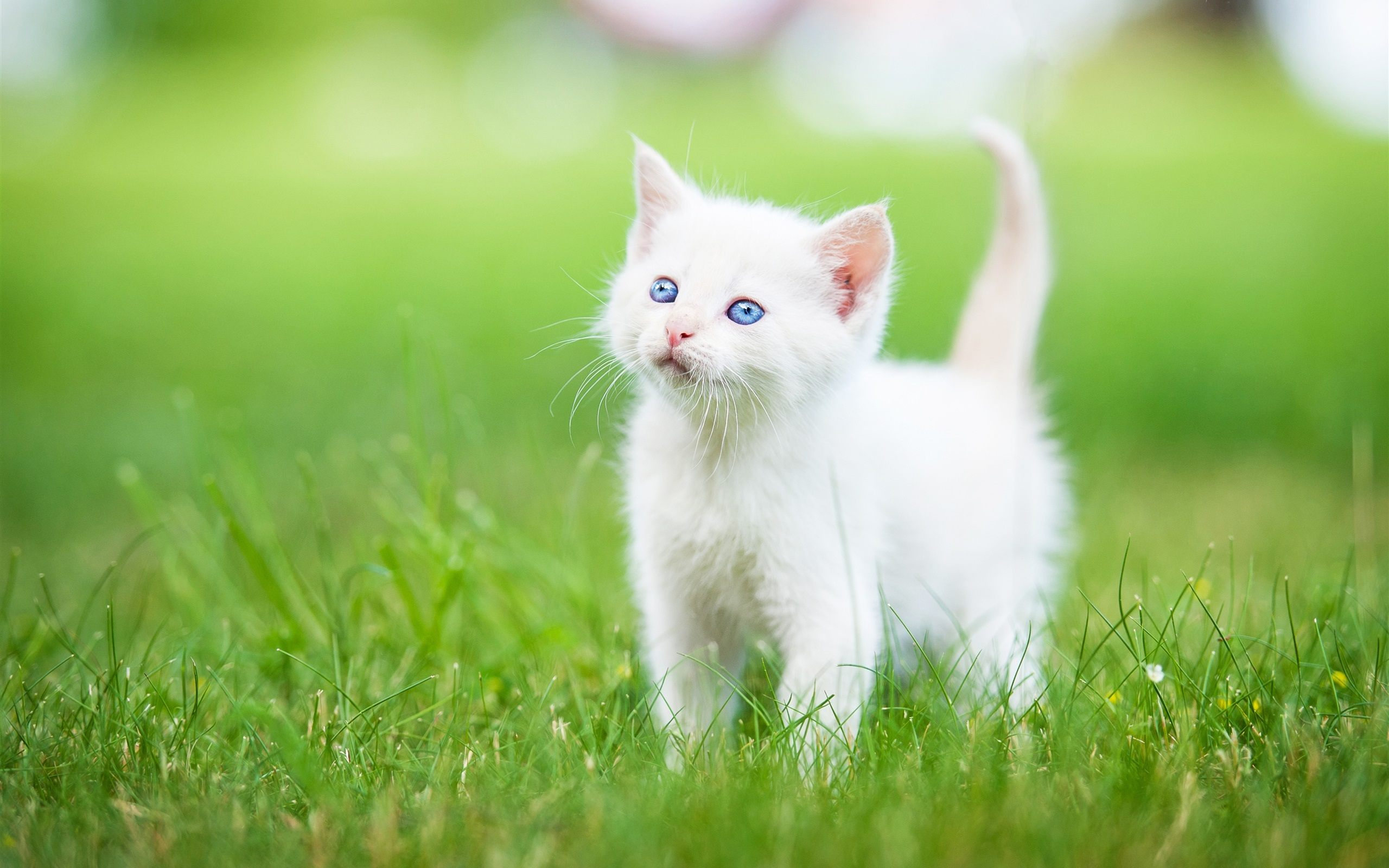 How to Take Care of Your Kitten When You Buy a Kitten- Do's And Don'ts