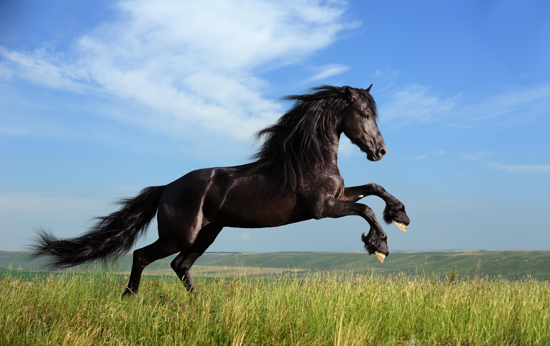 Rails And Pops in Horse Fences Make Positive Impression