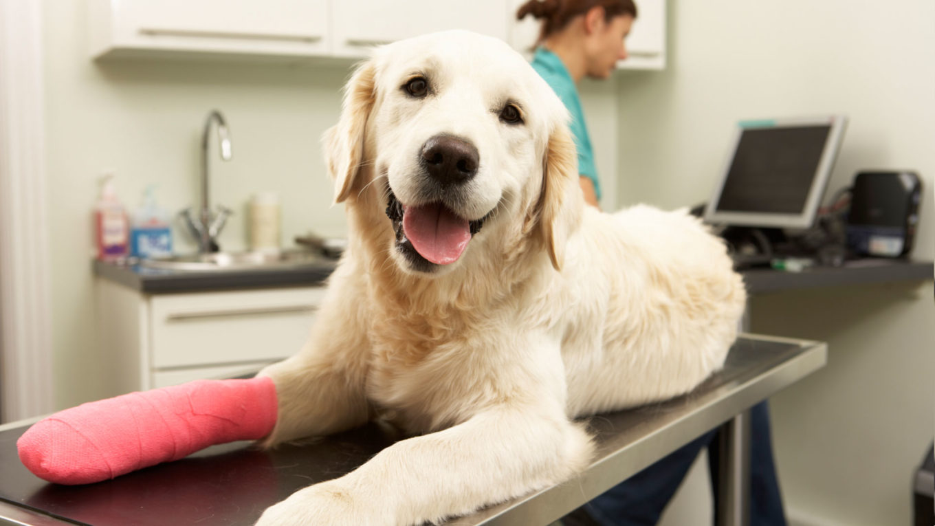 Taking Care of Your Pet With Vet Clinic and Pet Clinic in Lincoln