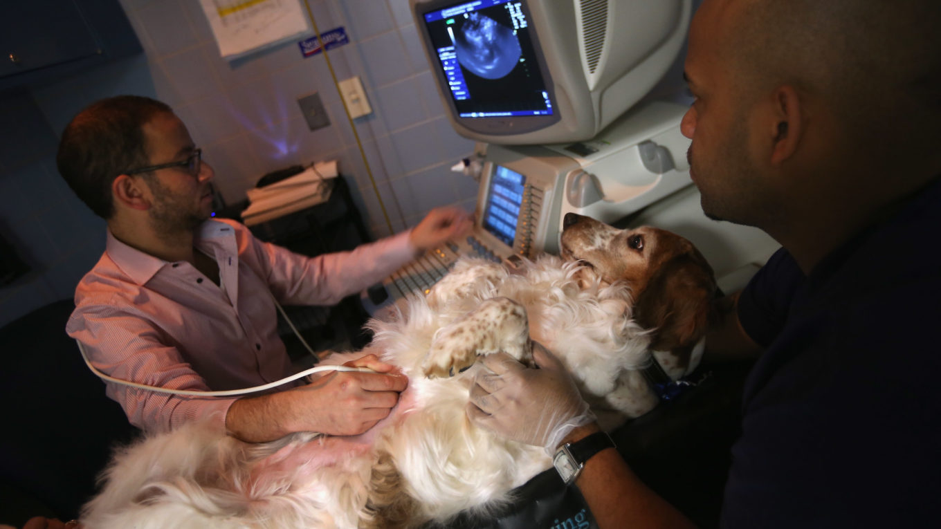 Veterinarian Services Lincoln Aims to Liven Up Pet Life